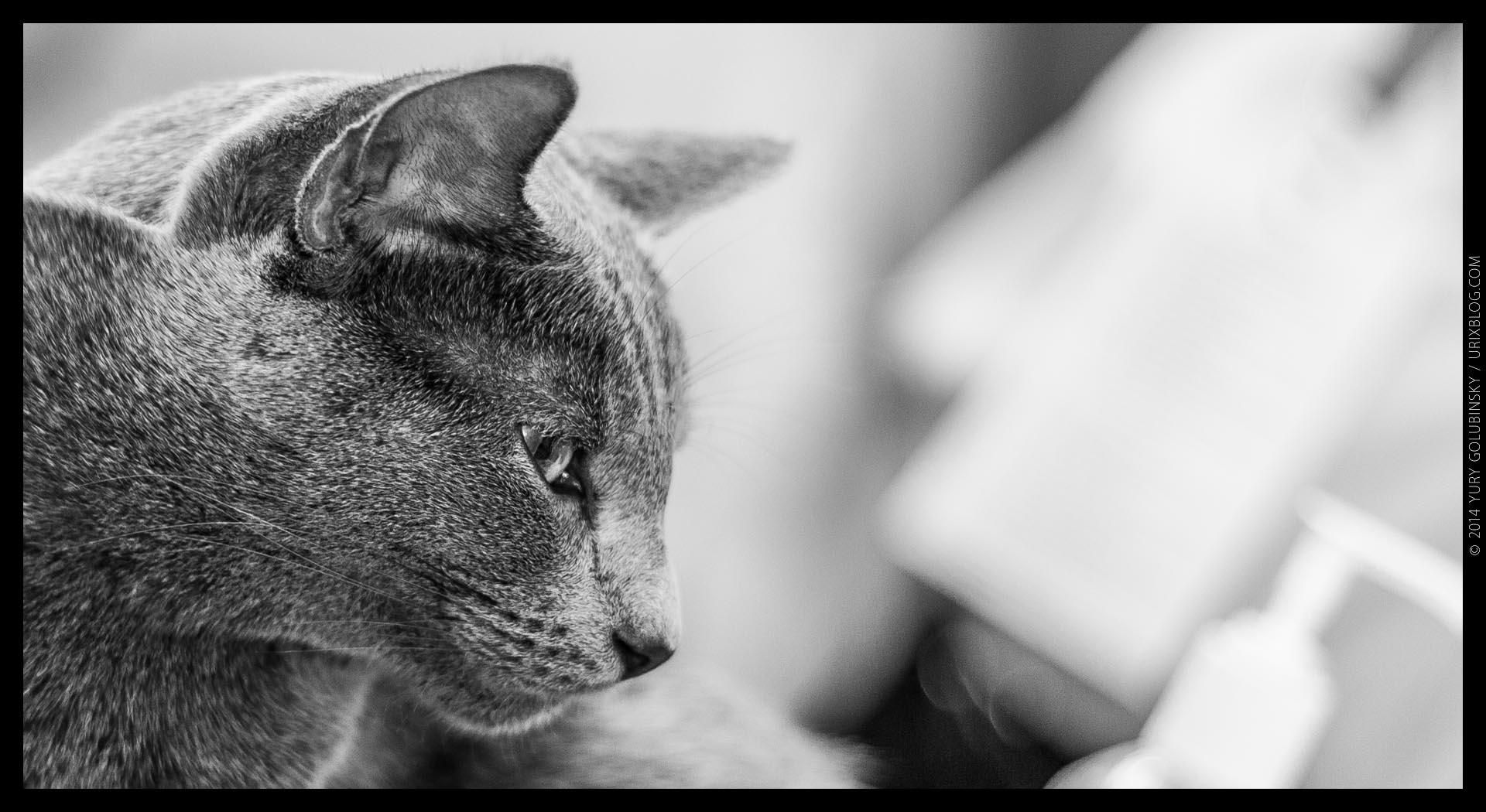 2014, выставка ИнфоКот, кот, котик, кошка, ЧБ, чёрно-белое, панорама, Москва, Россия