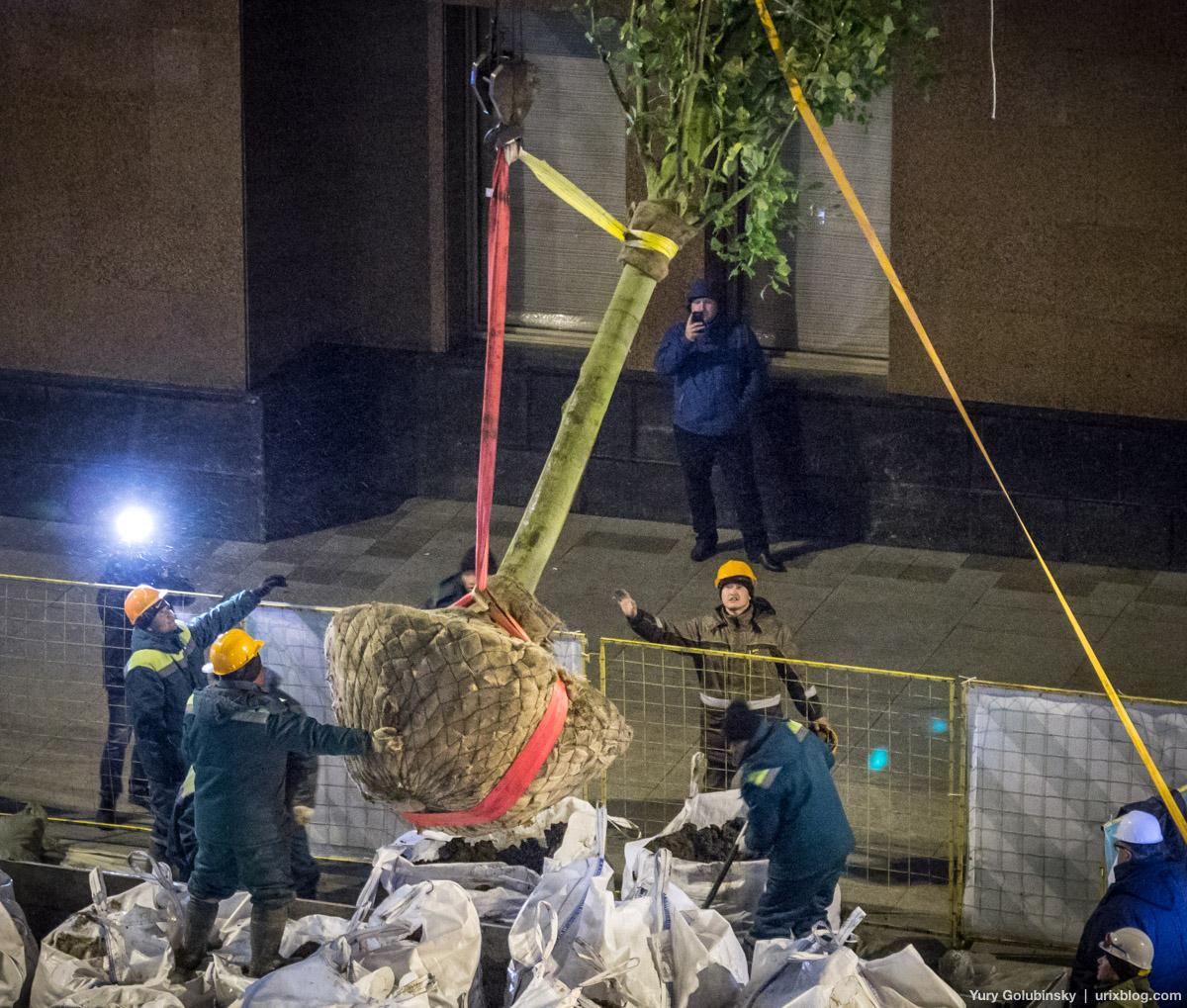 1-я Тверская-Ямская, новые деревья, первое дерево, моя улица, ночь, работа, Москва, Россия, 2017