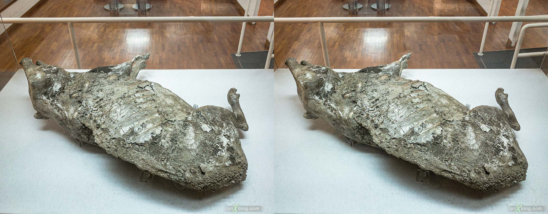 pig, Museum, excavations, villa Regina, Boscoreale, Pompei, Italy, 3D, stereo pair, cross-eyed, crossview, cross view stereo pair, stereoscopic