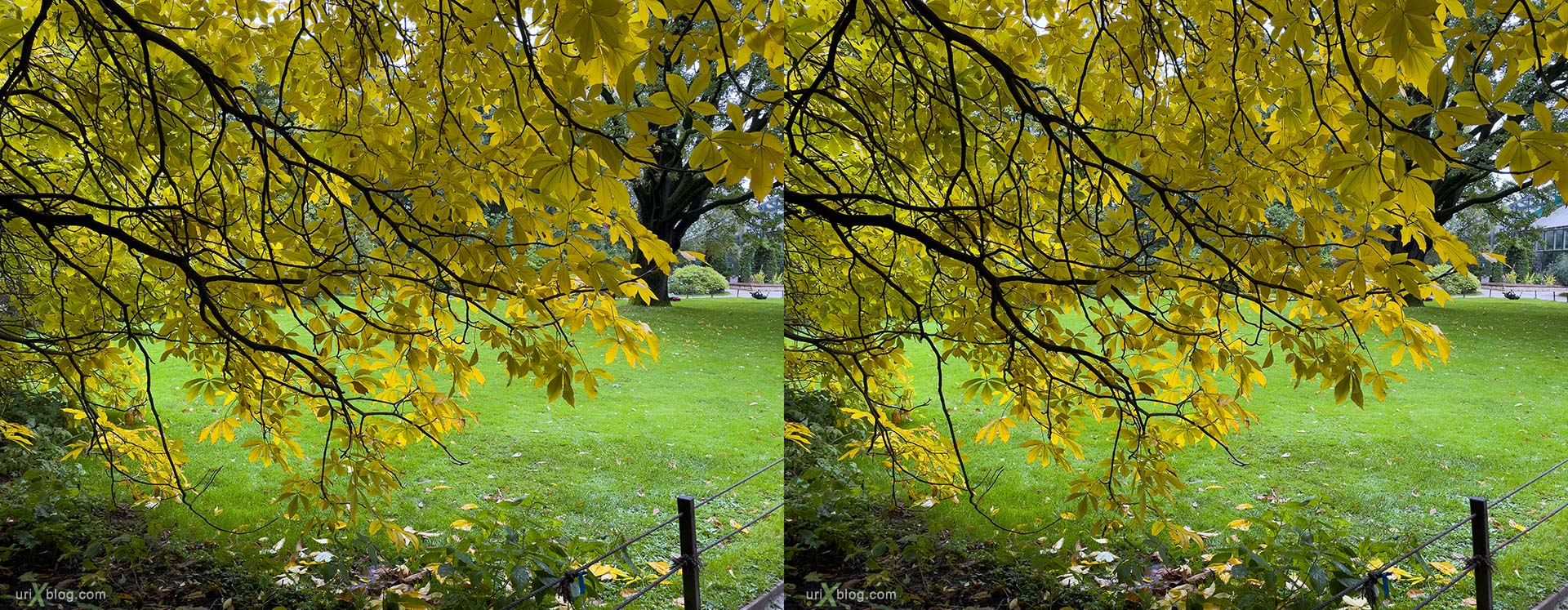 Pharmaceutical Garden, Russia, Moscow, 3D, stereo pair, cross-eyed, crossview, cross view stereo pair, stereoscopic