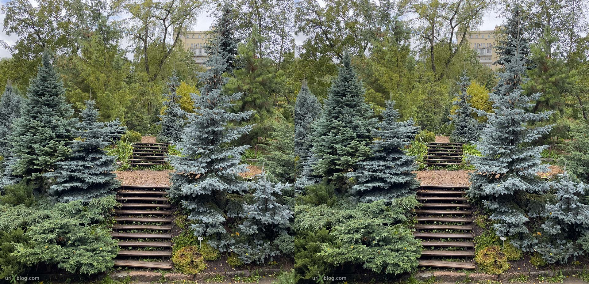 hill, Pharmaceutical Garden, Russia, Moscow, 3D, stereo pair, cross-eyed, crossview, cross view stereo pair, stereoscopic