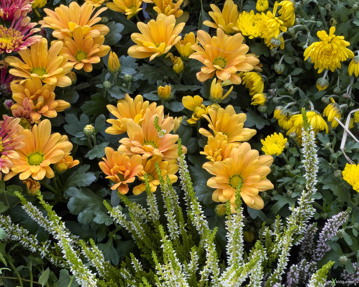 flowers, Display P3, Pharmaceutical garden, Moscow, Russia