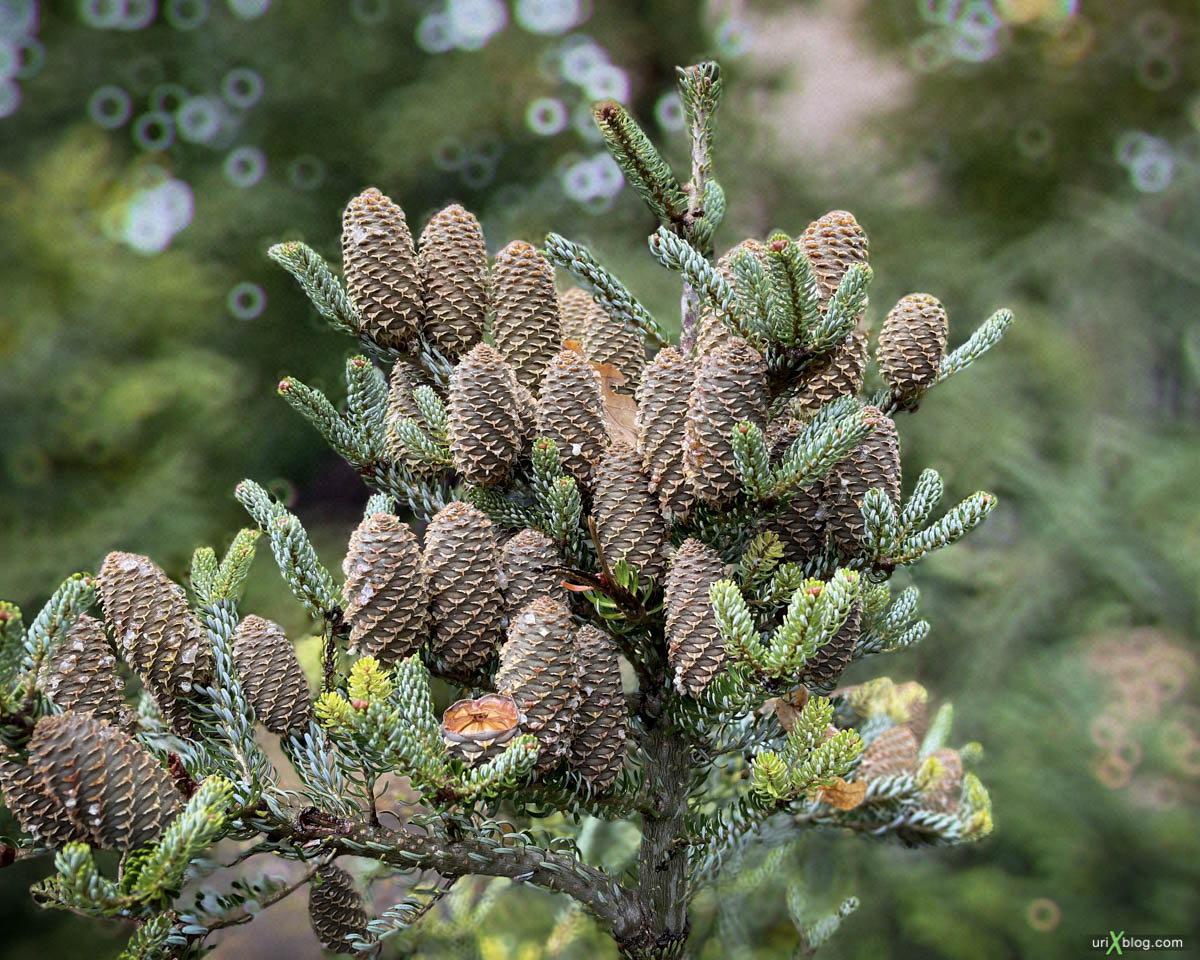 tree cones, Display P3, Pharmaceutical garden, Moscow, Russia