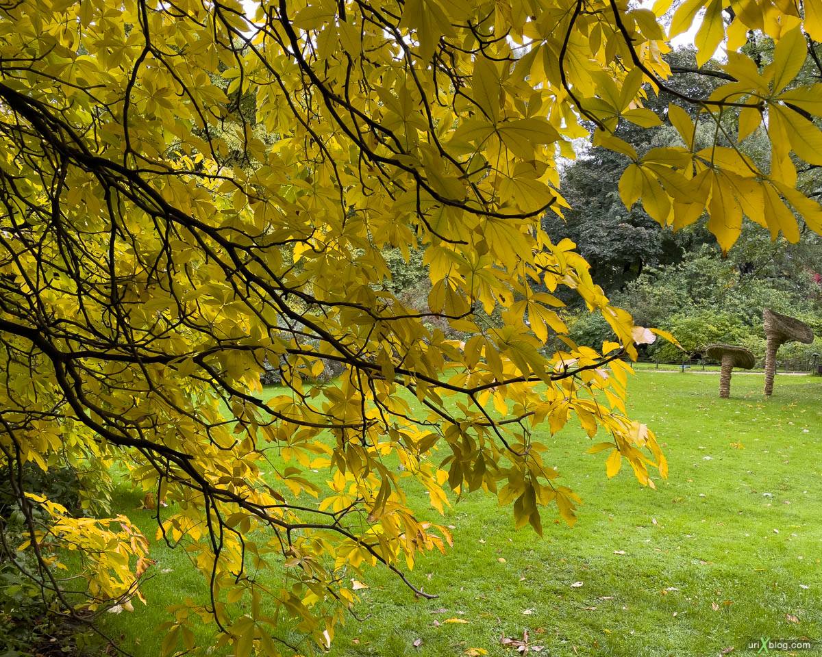 foliage, yellow leaves, Display P3, Pharmaceutical garden, Moscow, Russia