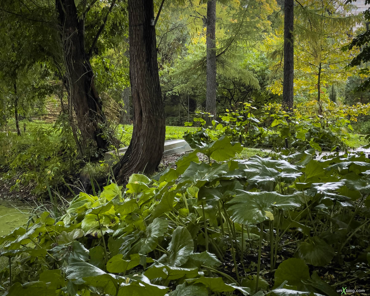 forest, Display P3, Pharmaceutical garden, Moscow, Russia