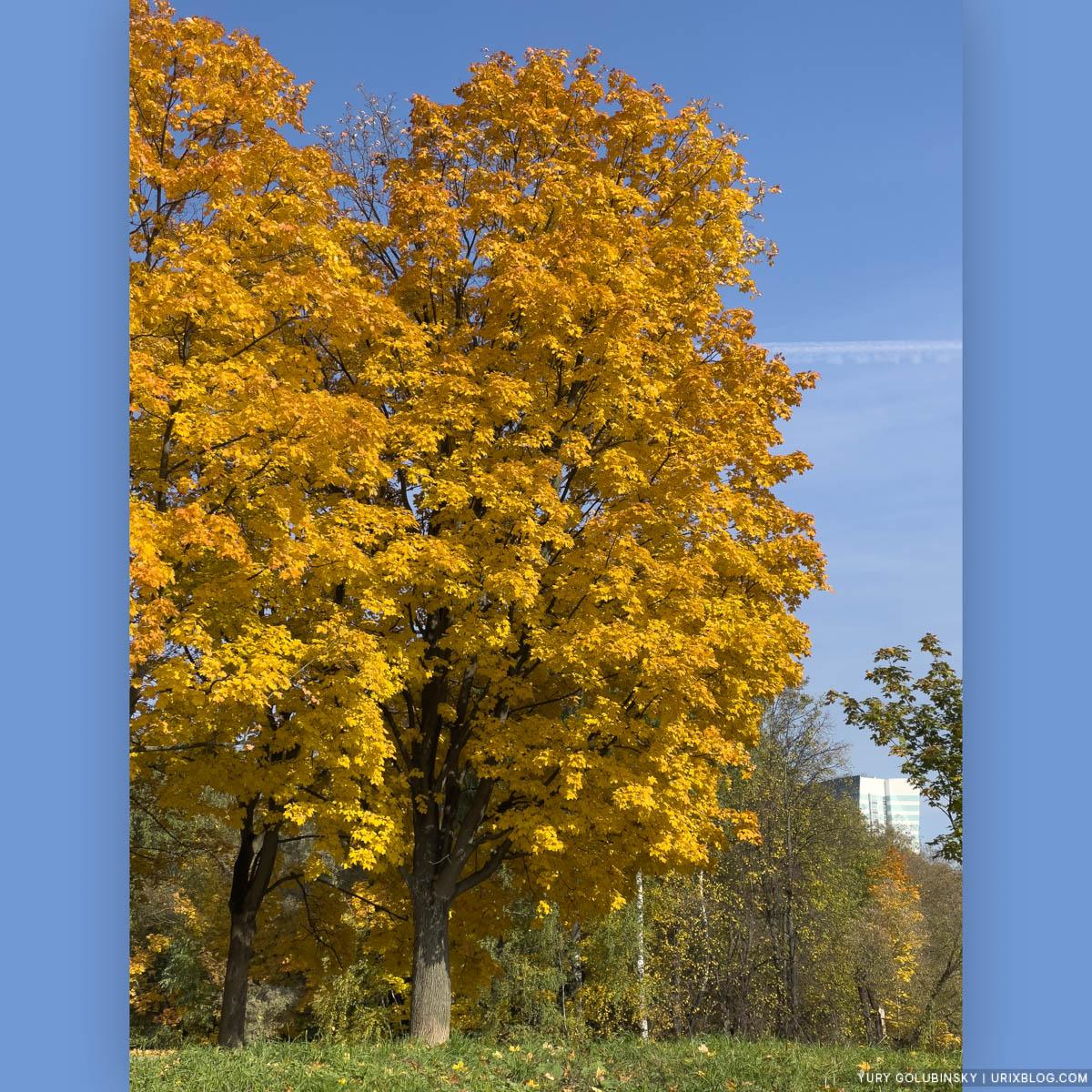 осень, жёлтые листья, парк Дружбы, Речной вокзал, Display P3, Москва, Россия