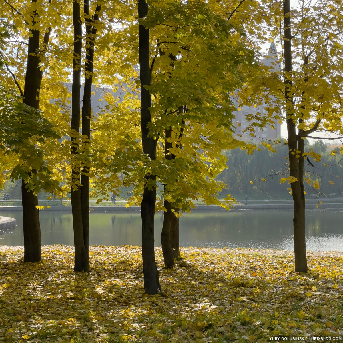 autumn, yellow leaves, Park of Friendship, Northern River Station, Display P3, Moscow, Russia