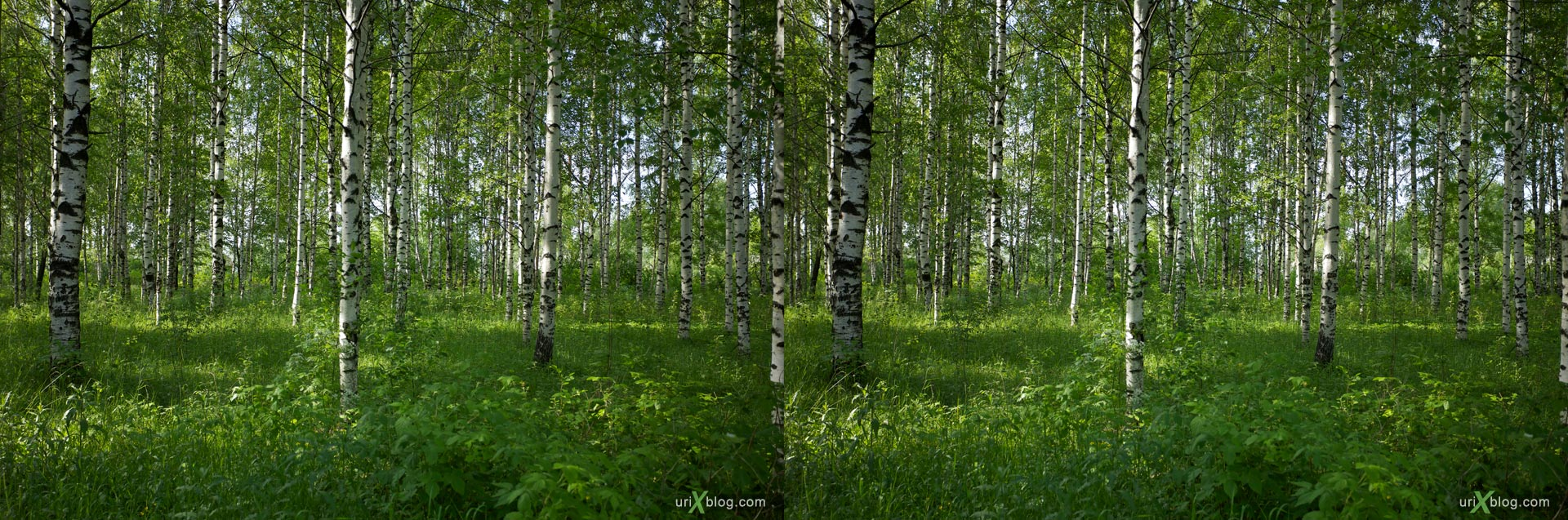 Right-Left stereo pair source source, forrest at Arkhangelsk region, Russia