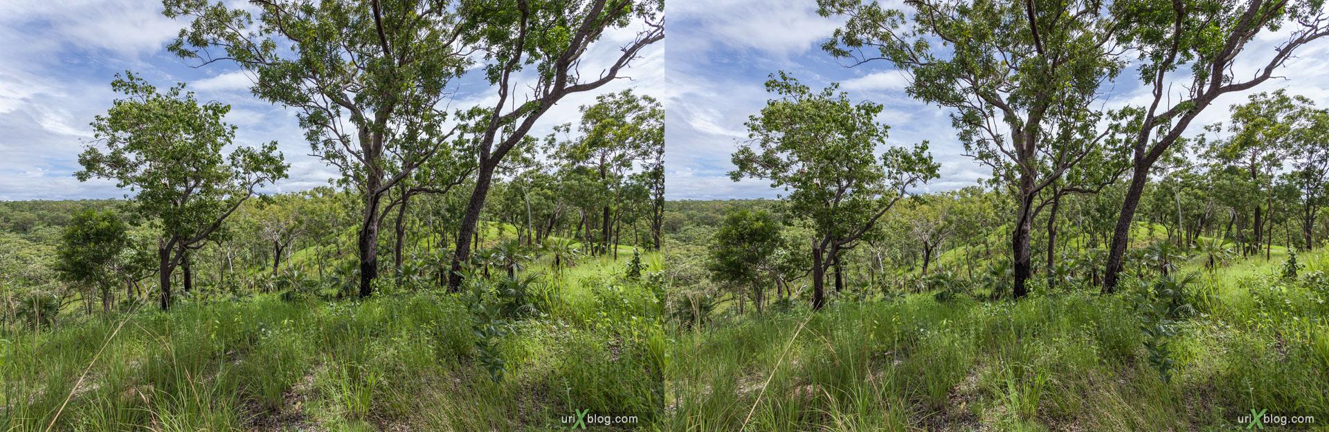 лес, панорама, Kakadu National Park, Северная территория, Австралия, 3D, перекрёстная стереопара, стерео, стереопара, 2011