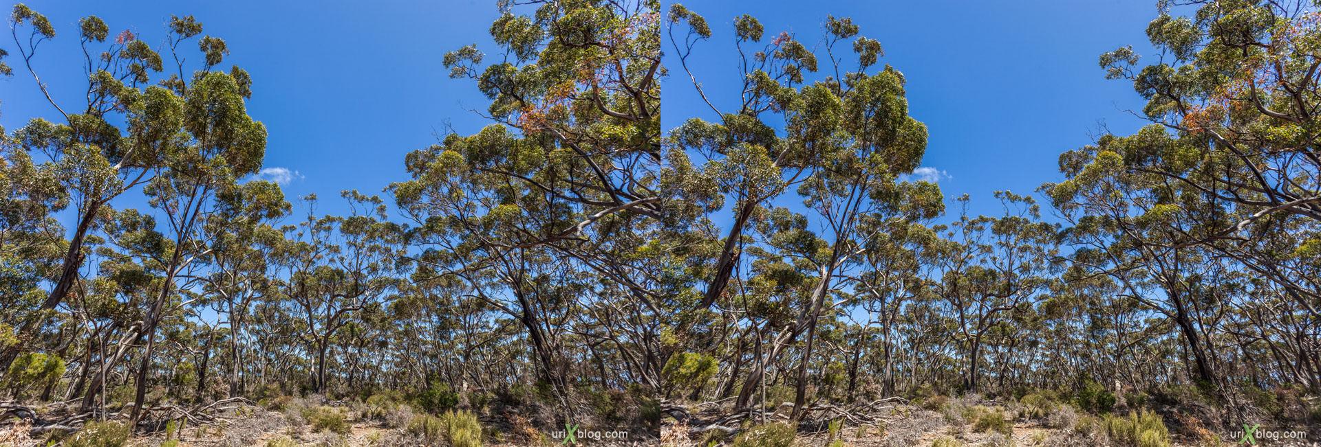 лес, старое кладбище, Cape Borda, Ravine Des Casoars Wilderness Protection Area, остров Кенгуру, Австралия, 3D, перекрёстная стереопара, стерео, стереопара, 2011