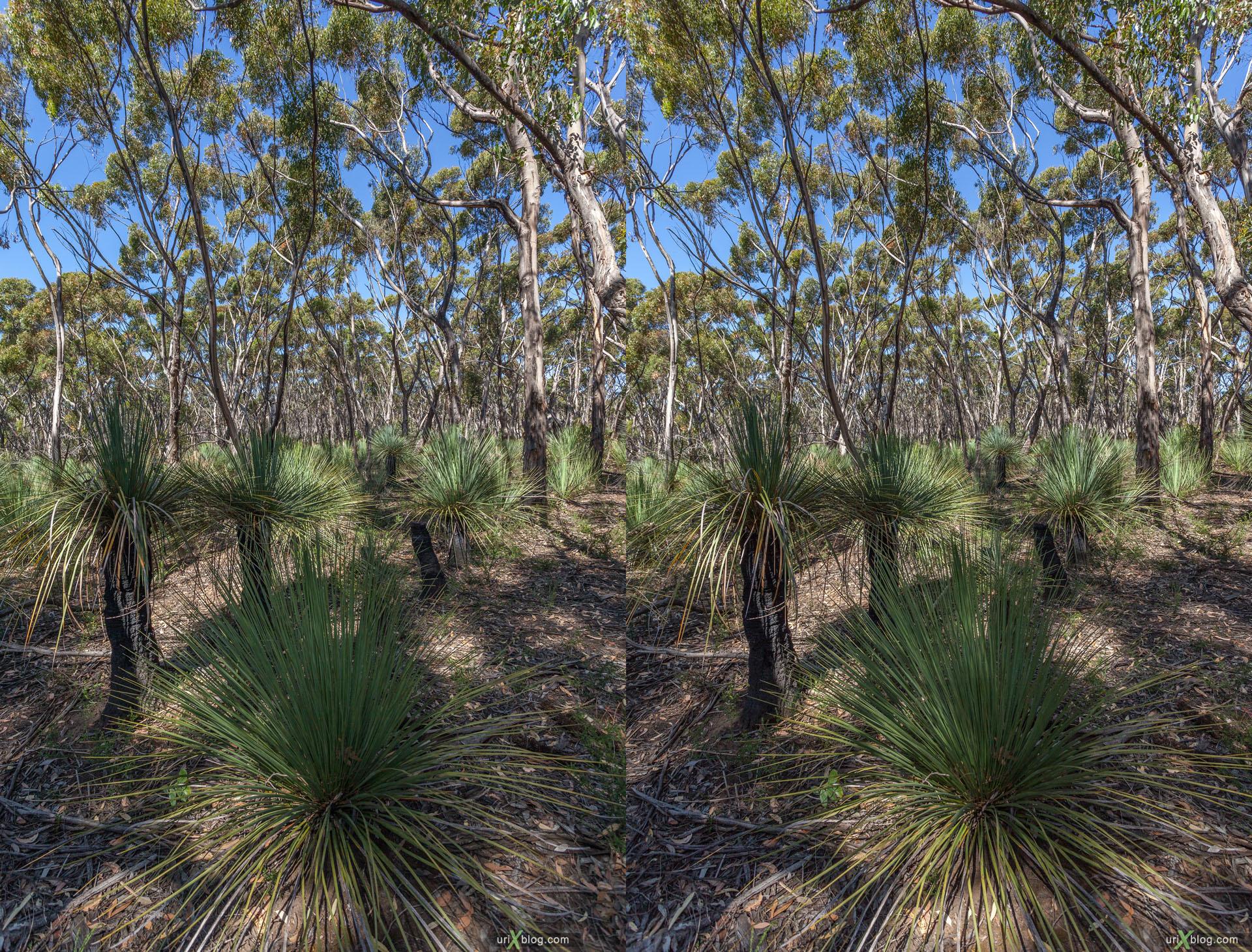 лес, Flinders Chase National Park, остров Кенгуру, Австралия, 3D, перекрёстная стереопара, стерео, стереопара, 2011