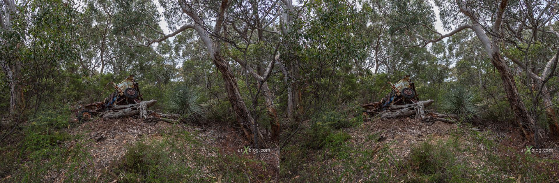 дорога, лес, Kelly Hill Conservation Park, остров Кенгуру, Австралия, 3D, перекрёстная стереопара, стерео, стереопара, 2011