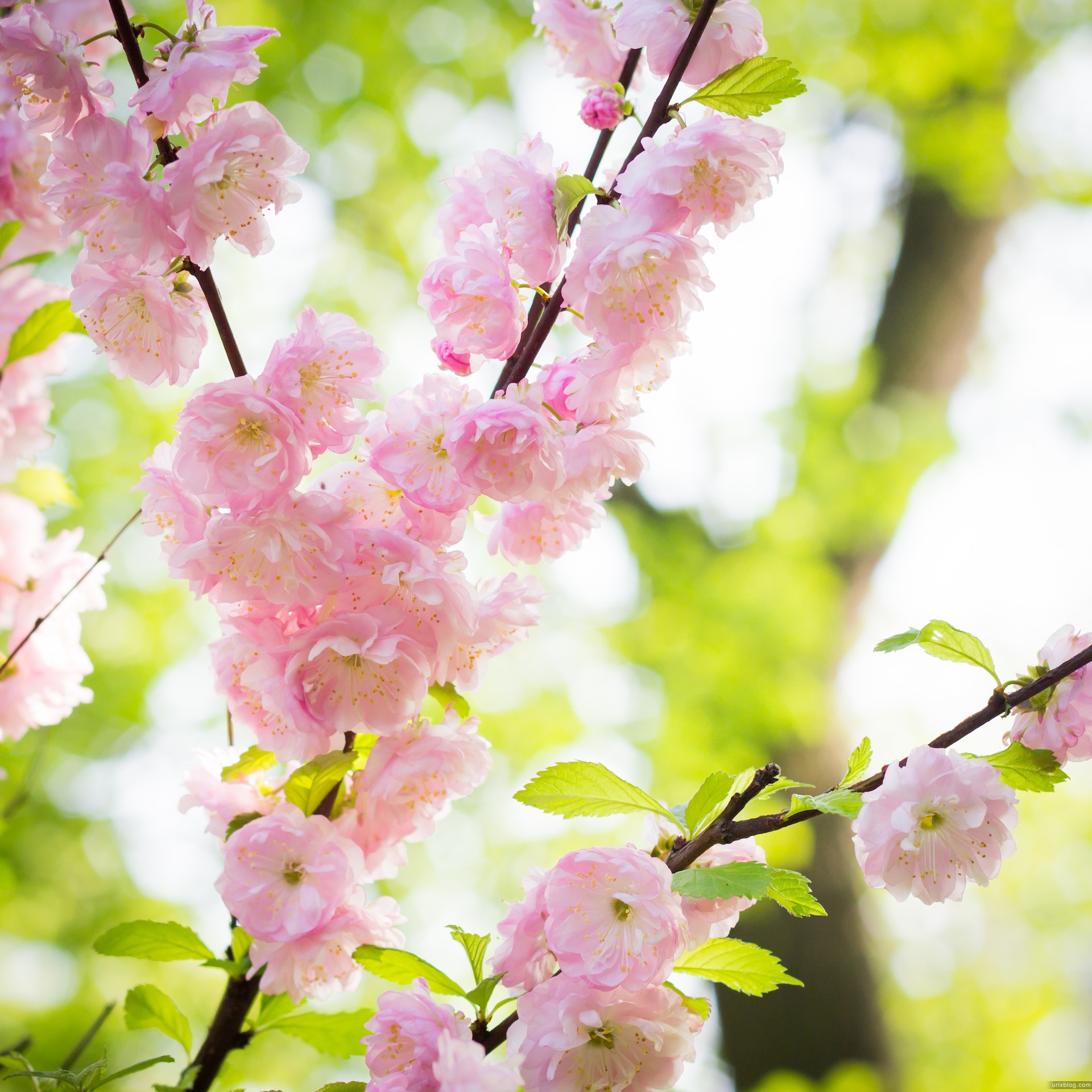 Юкен ютьюб огород и сад цветы