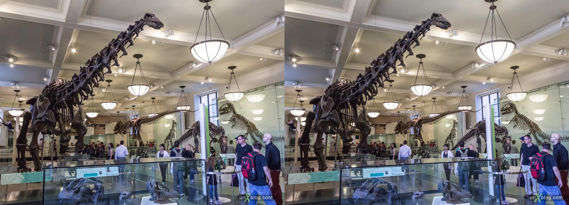 2013, Американский Музей Естественной Истории, Нью-Йорк, США, Скелет, Донозавр, животное, чучело, 3D, перекрёстные стереопары, стерео, стереопара, стереопары