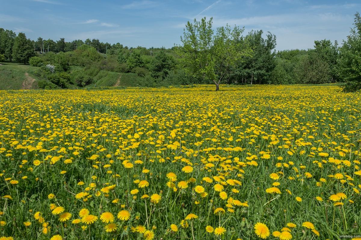 Nhà thơ với thiên nhiên và mùa xuân (Ngô Thị Học)
